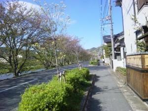 [H22.04.21]今年の桜も終わり
